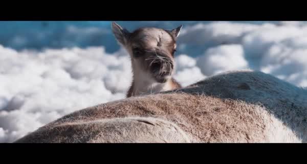 bande-annonce Aïlo : une odyssée en Laponie